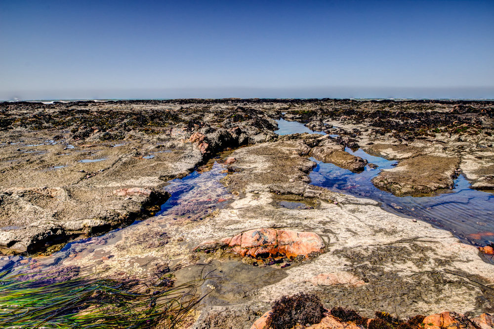 2013 05 14 - Duxbury Reef Field Trip - Mr. Taylor 1st Grade-18-0.jpg