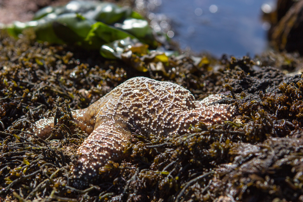 Did you know they call these Sea Stars now?