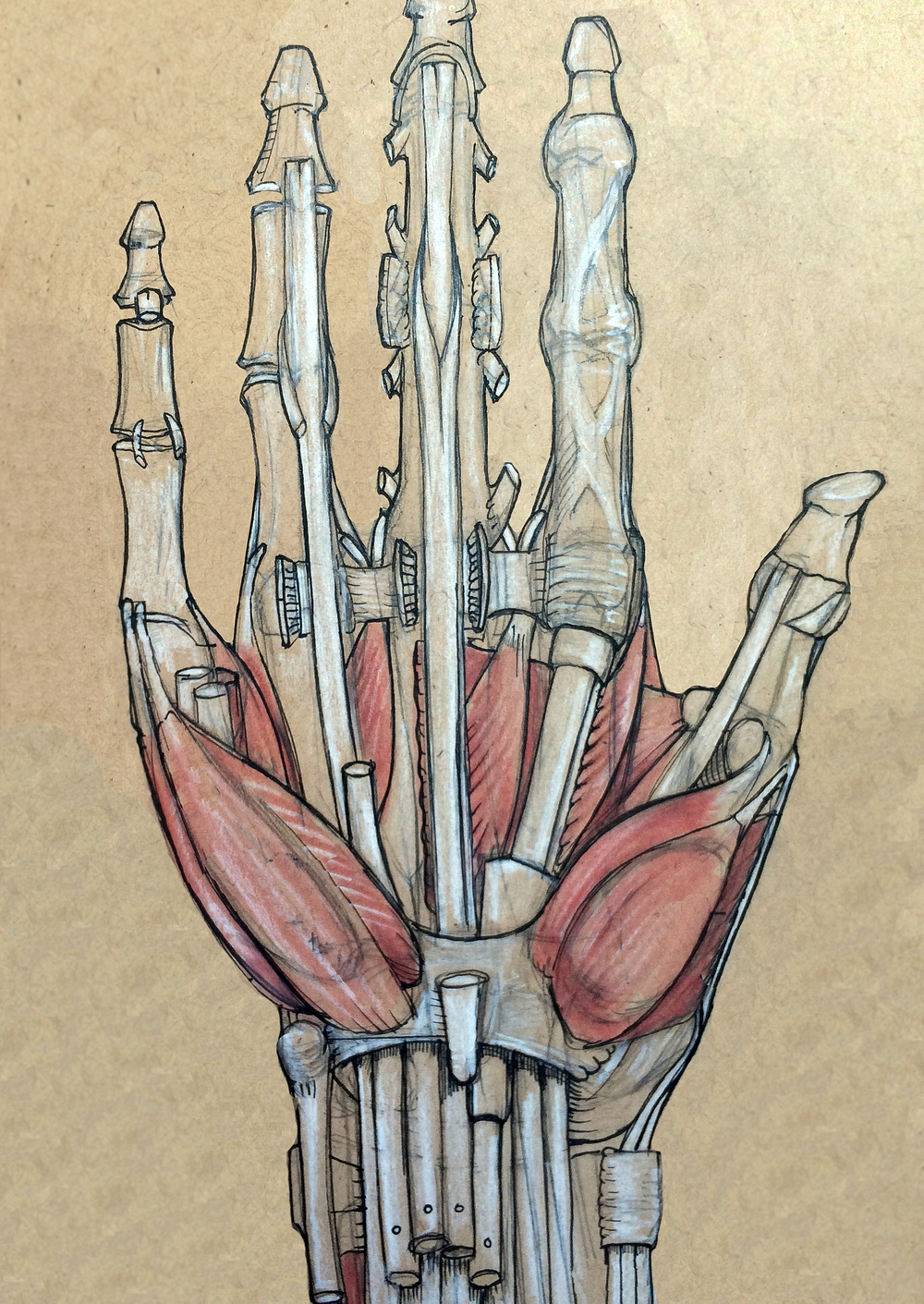 Anatomy Hand Two.jpg