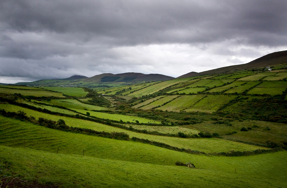 Fields-of-Ireland.jpg