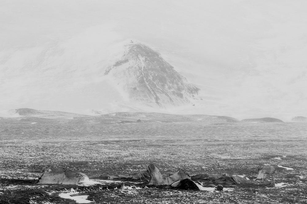 Whale Vertibrae - DECEPTION ISLAND