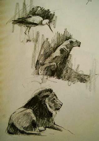 Lions,Gabor Svagrik.jpg