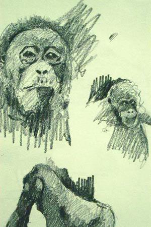 Orangutan,Gabor Svagrik.jpg