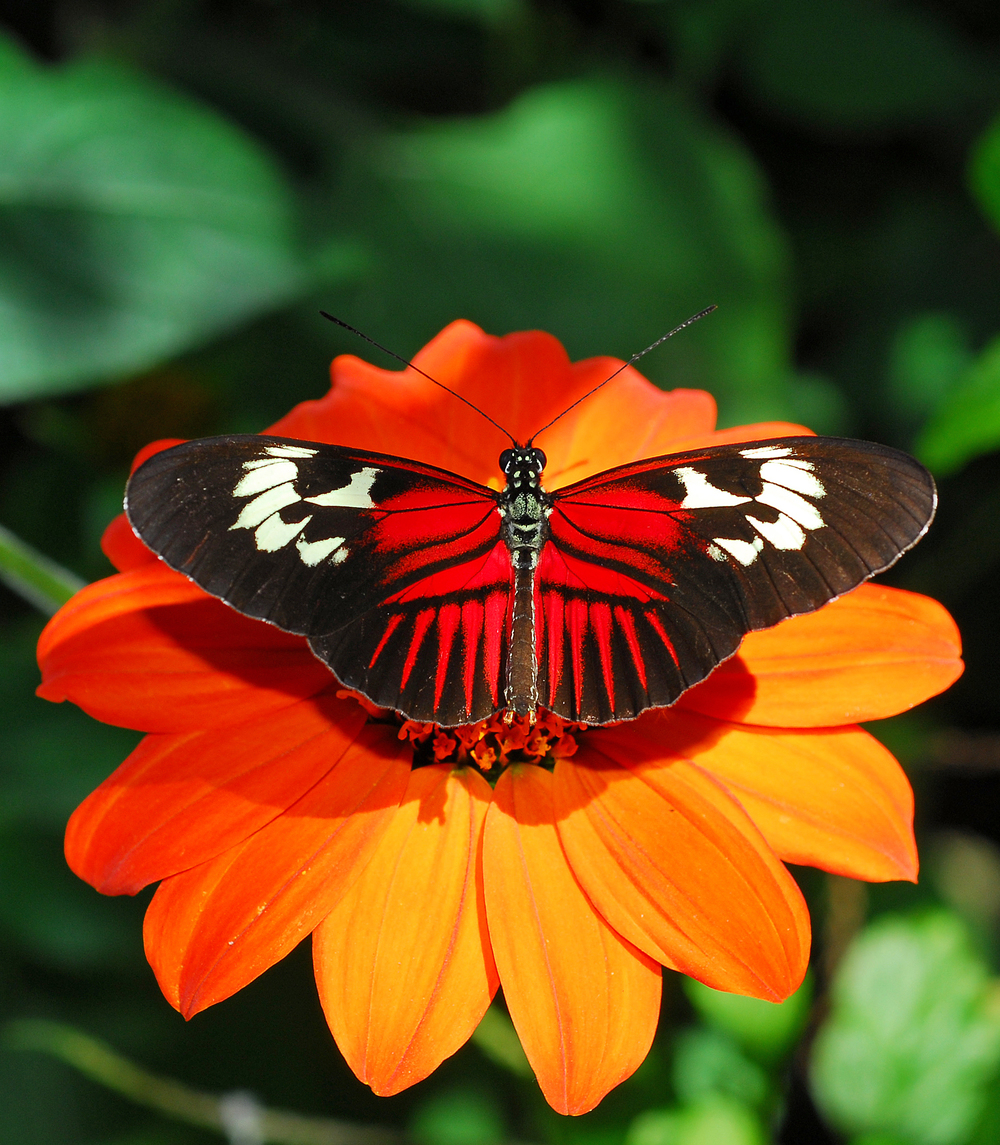 Butterfly on Flower1.jpg