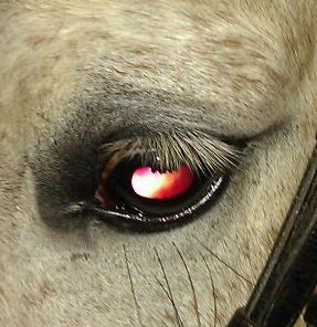 Horses have evolved with humans, so it makes sense that they understand us in profound ways.