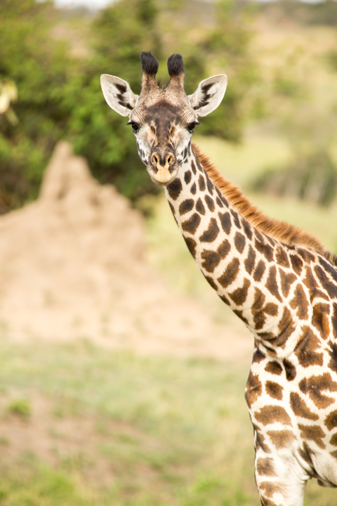www.dynamitestudioinc.com-serengeti-africa-professional-travel-photography-orlando-2.jpg