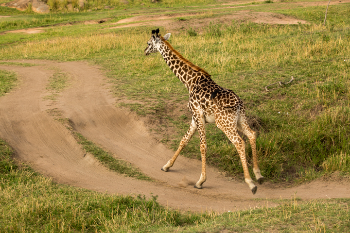 www.dynamitestudioinc.com-serengeti-africa-professional-travel-photography-orlando-4.jpg