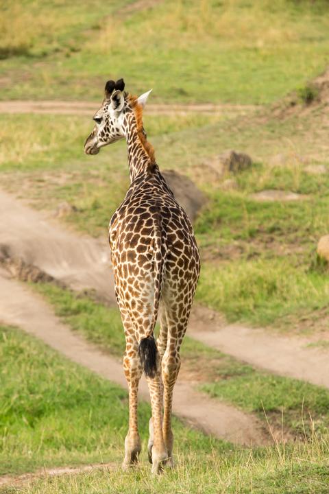 www.dynamitestudioinc.com-serengeti-africa-professional-travel-photography-orlando-6.jpg