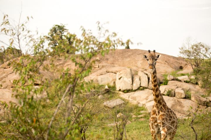 www.dynamitestudioinc.com-serengeti-africa-professional-travel-photography-orlando-10.jpg