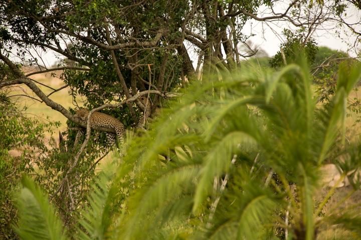 www.dynamitestudioinc.com-serengeti-africa-professional-travel-photography-orlando-13.jpg