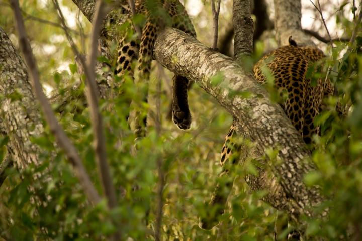 www.dynamitestudioinc.com-serengeti-africa-professional-travel-photography-orlando-14.jpg