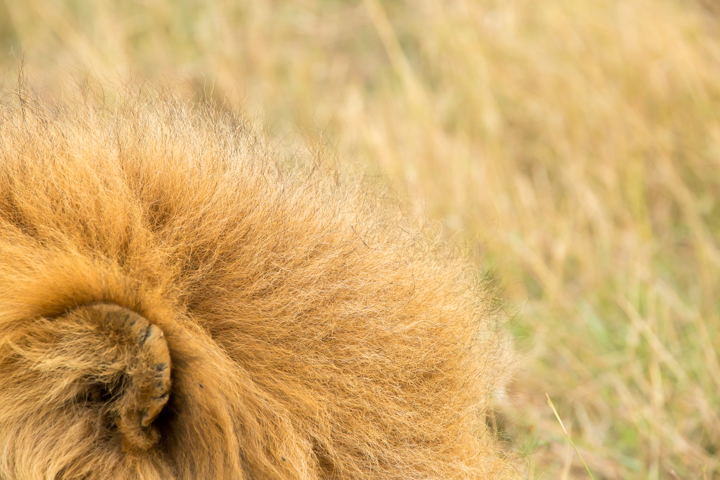 www.dynamitestudioinc.com-serengeti-africa-professional-travel-photography-orlando-16.jpg