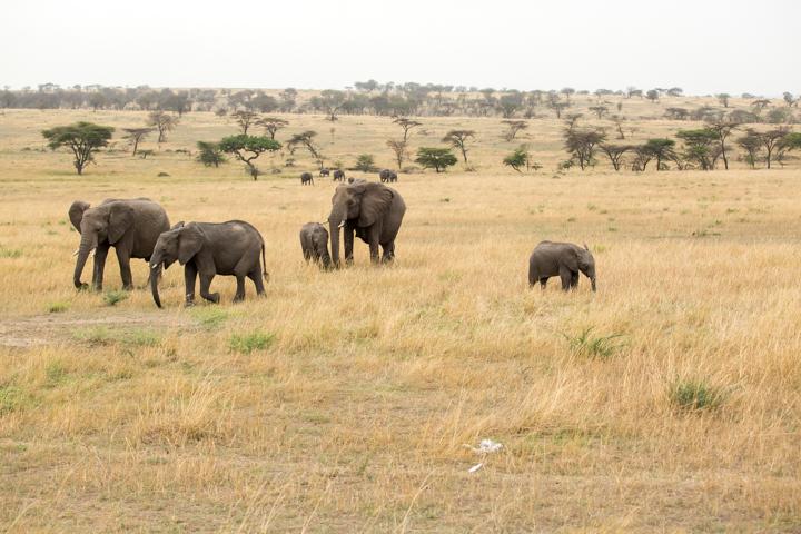 www.dynamitestudioinc.com-serengeti-africa-professional-travel-photography-orlando-17.jpg