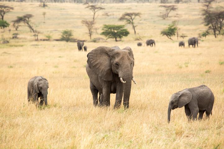 www.dynamitestudioinc.com-serengeti-africa-professional-travel-photography-orlando-21.jpg