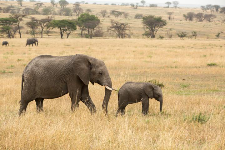 www.dynamitestudioinc.com-serengeti-africa-professional-travel-photography-orlando-22.jpg