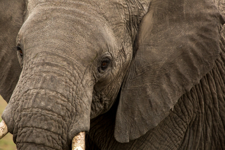 www.dynamitestudioinc.com-serengeti-africa-professional-travel-photography-orlando-25.jpg