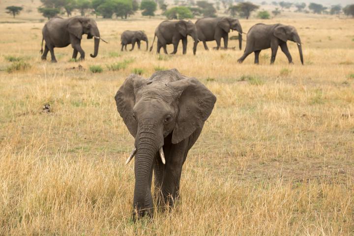 www.dynamitestudioinc.com-serengeti-africa-professional-travel-photography-orlando-26.jpg