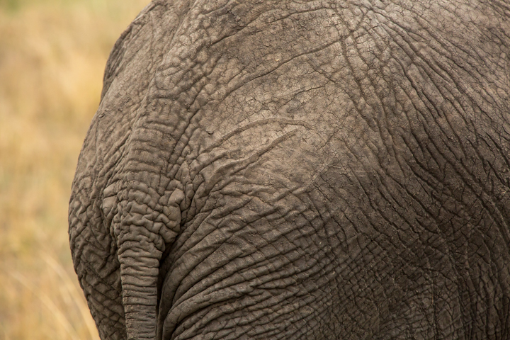 www.dynamitestudioinc.com-serengeti-africa-professional-travel-photography-orlando-28.jpg