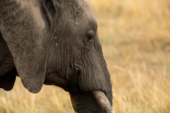 www.dynamitestudioinc.com-serengeti-africa-professional-travel-photography-orlando-27.jpg