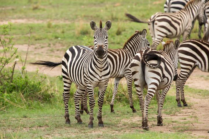 www.dynamitestudioinc.com-serengeti-africa-professional-travel-photography-orlando-30.jpg