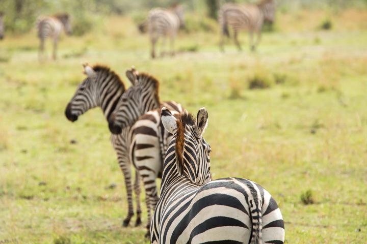 www.dynamitestudioinc.com-serengeti-africa-professional-travel-photography-orlando-32.jpg