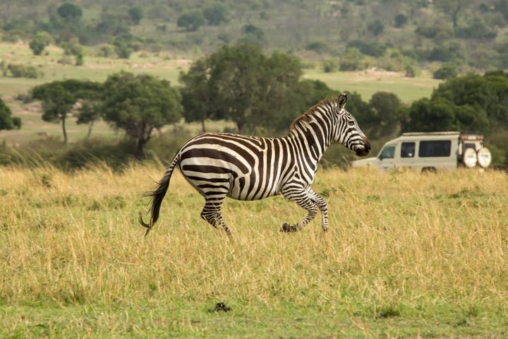 www.dynamitestudioinc.com-serengeti-africa-professional-travel-photography-orlando-33.jpg