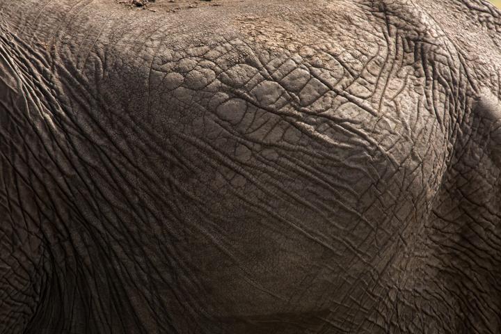 www.dynamitestudioinc.com-serengeti-africa-professional-travel-photography-orlando-35.jpg