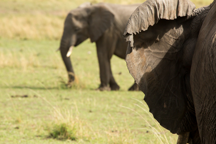 www.dynamitestudioinc.com-serengeti-africa-professional-travel-photography-orlando-36.jpg
