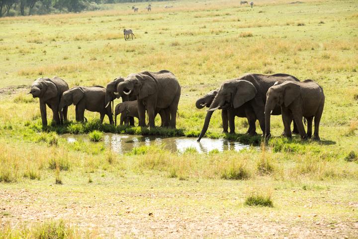 www.dynamitestudioinc.com-serengeti-africa-professional-travel-photography-orlando-37.jpg
