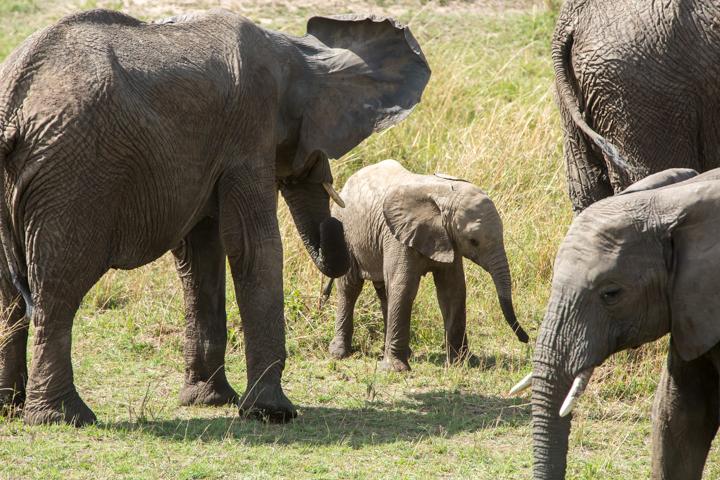 www.dynamitestudioinc.com-serengeti-africa-professional-travel-photography-orlando-40.jpg
