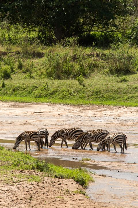 www.dynamitestudioinc.com-serengeti-africa-professional-travel-photography-orlando-43.jpg
