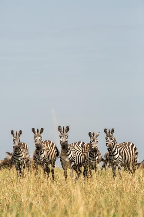 www.dynamitestudioinc.com-serengeti-africa-professional-travel-photography-orlando-45.jpg
