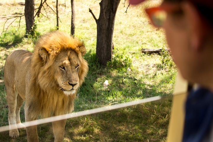 www.dynamitestudioinc.com-serengeti-africa-professional-travel-photography-orlando-46.jpg