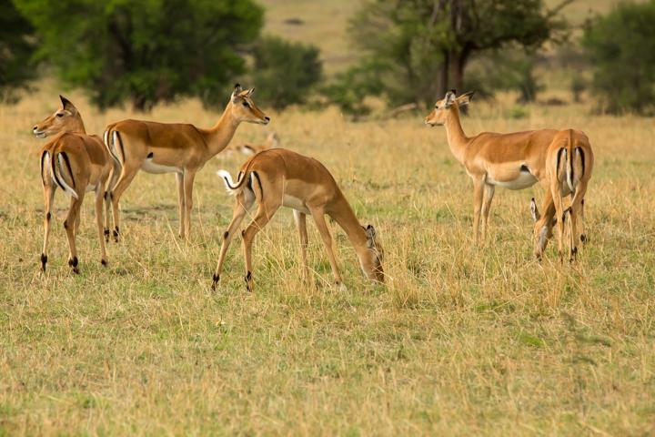www.dynamitestudioinc.com-serengeti-africa-professional-travel-photography-orlando-49.jpg