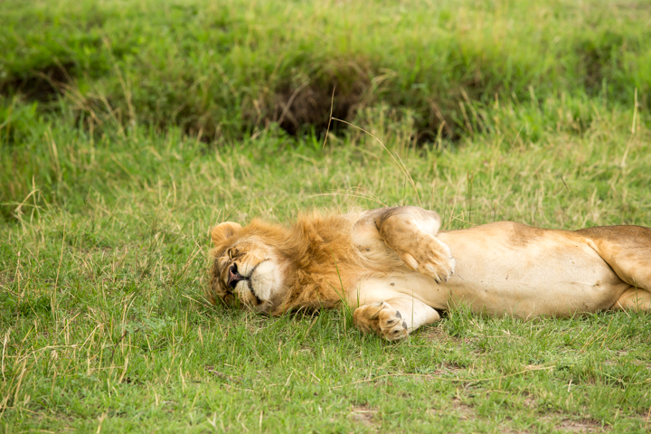 www.dynamitestudioinc.com-serengeti-africa-professional-travel-photography-orlando-51.jpg