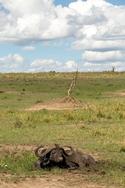 www.dynamitestudioinc.com-tanzania-serengeti-africa-professional-travel-photography-orlando-6806.jpg