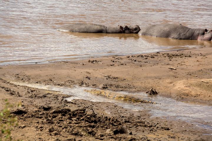 www.dynamitestudioinc.com-tanzania-serengeti-africa-professional-travel-photography-orlando-6760.jpg