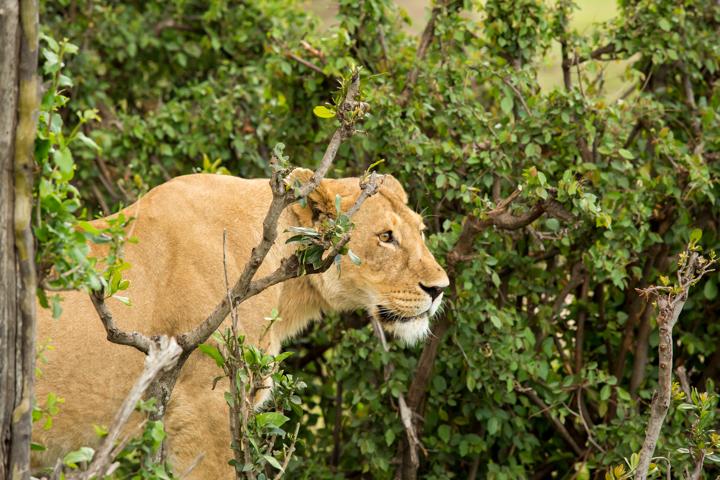 www.dynamitestudioinc.com-tanzania-serengeti-africa-professional-travel-photography-orlando-6903.jpg