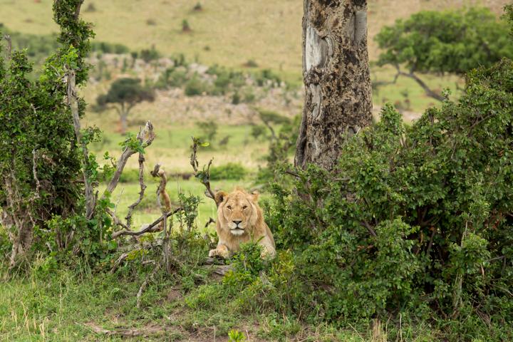 www.dynamitestudioinc.com-tanzania-serengeti-africa-professional-travel-photography-orlando-6996.jpg