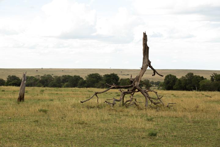 www.dynamitestudioinc.com-tanzania-serengeti-africa-professional-travel-photography-orlando-7024.jpg