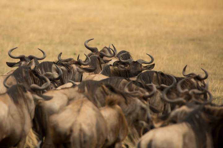 www.dynamitestudioinc.com-tanzania-serengeti-africa-professional-travel-photography-orlando-9639.jpg