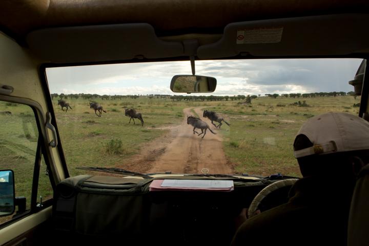 www.dynamitestudioinc.com-tanzania-serengeti-africa-professional-travel-photography-orlando-9758.jpg