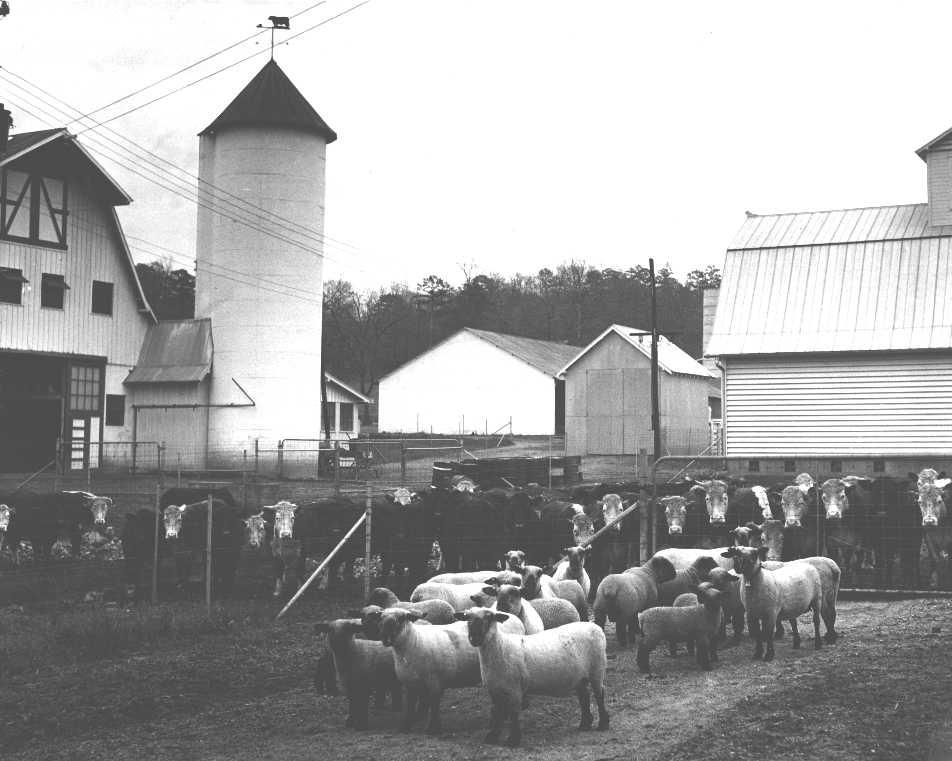 Hardwick Herd 1940_LOC5834.jpg