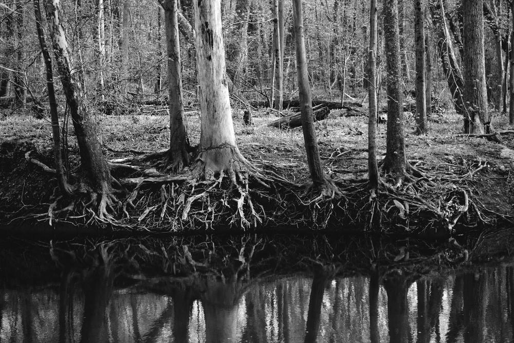 Roots growing deep in the hills of the Vandolah