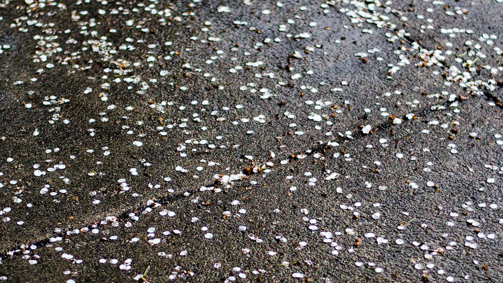 flowers-petals-rain-pavement-sidewalk