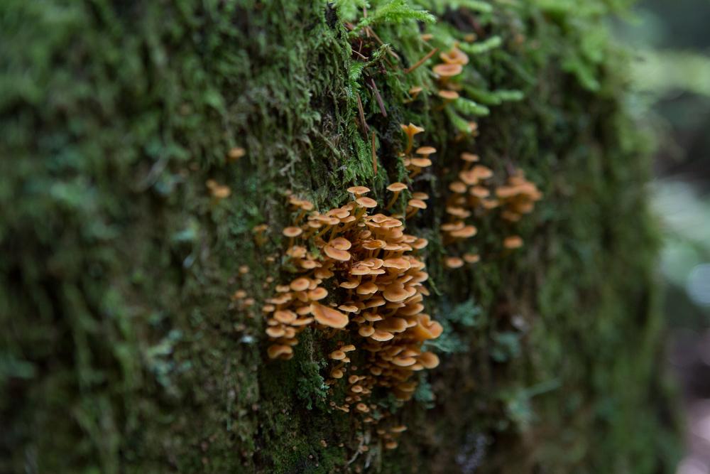 Pacific North West Fungi
