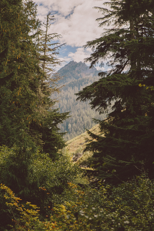 Hiking Mt Rainier