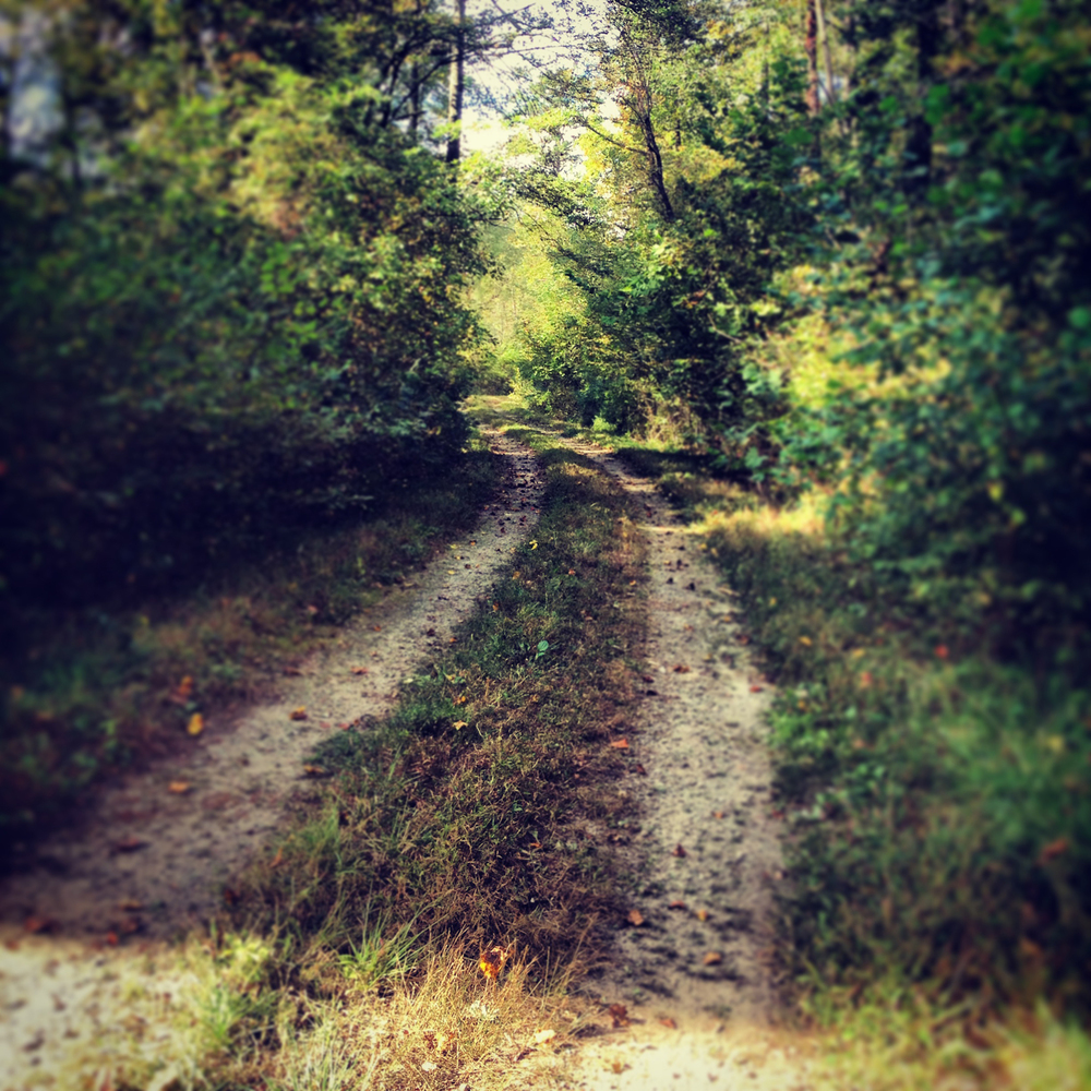 path copy.jpg