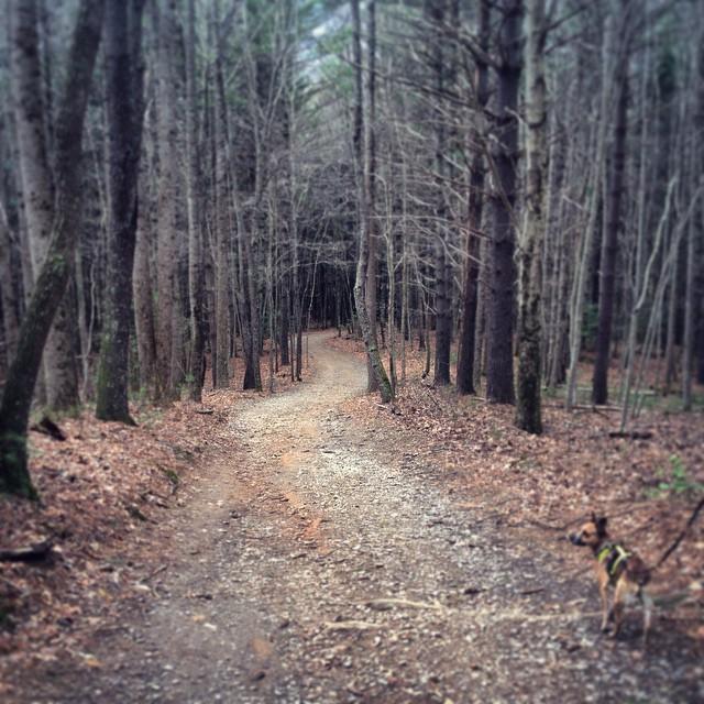 Quill and Arrow : North Carolina Arboretum