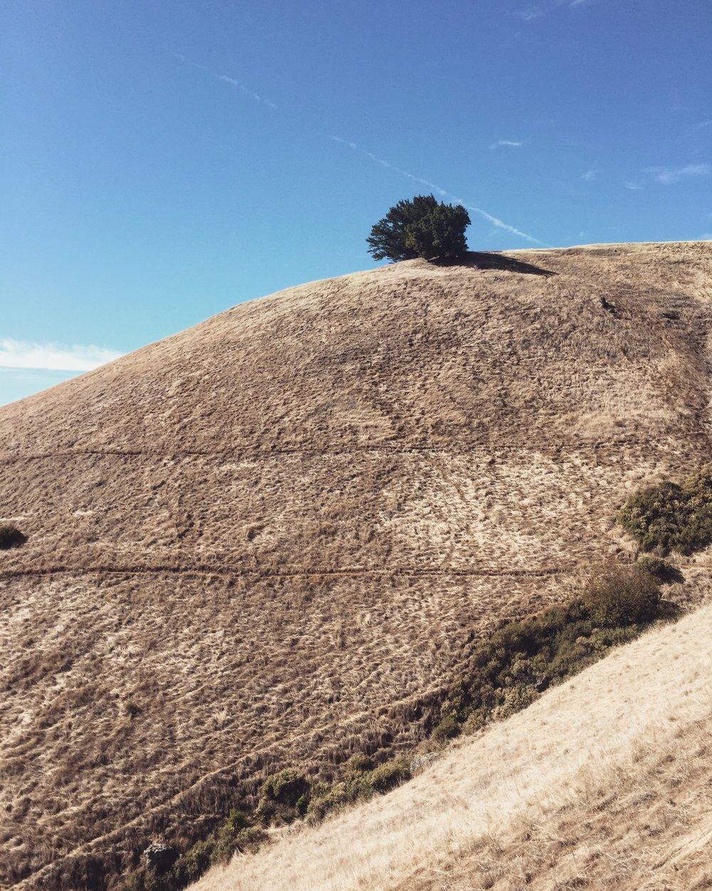 Quill and Arrow : Mount Tamalpais